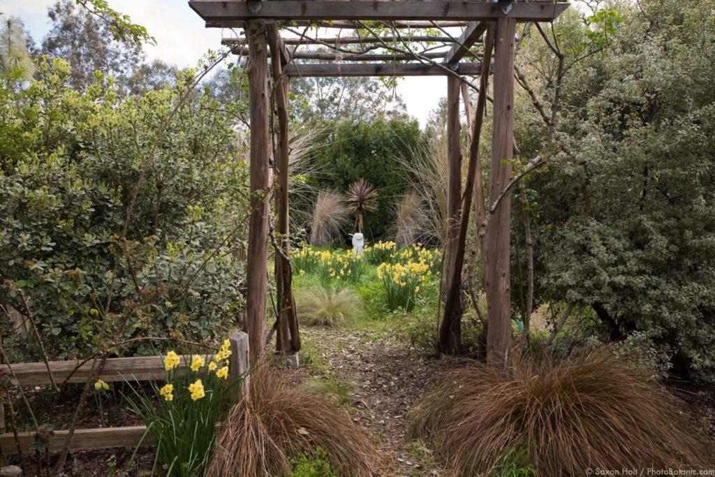 Entry into secret daffodil meadow garden through rustic pergola