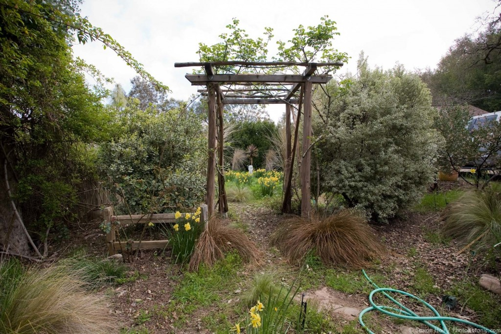Widest view of entry into secret daffodil meadow garden through rustic pergola