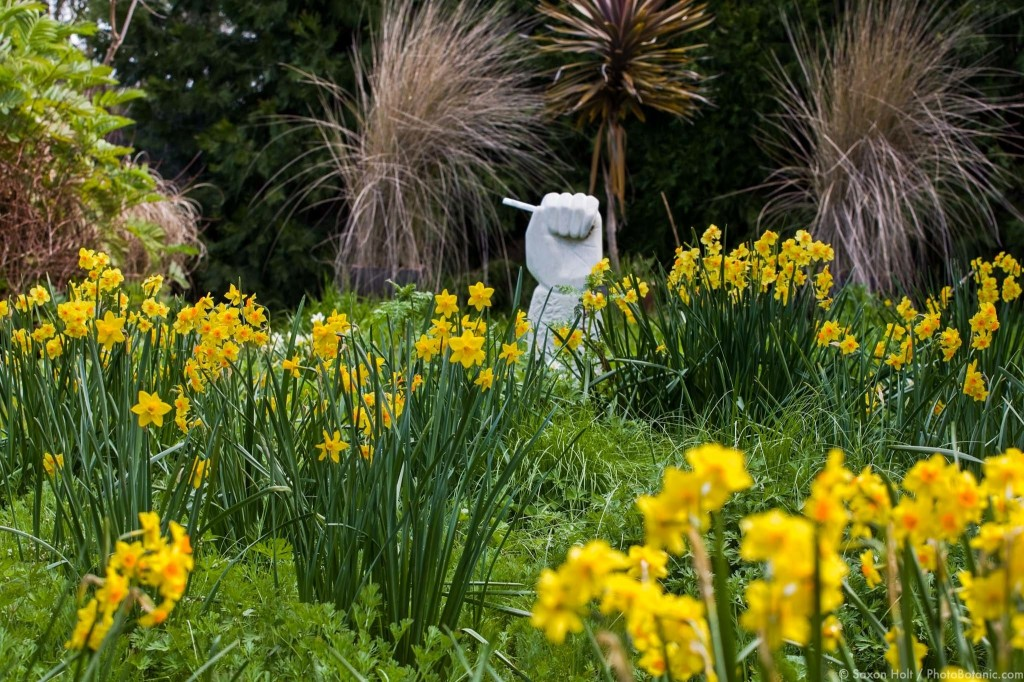 Tazetta daffodils in spring meadow garden with narcissus 'Falconet'