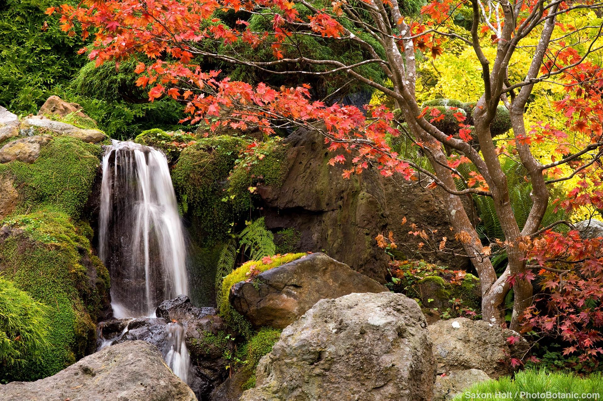 Japanese Tea Garden in Golden Gate Park, San Francisco, autumn