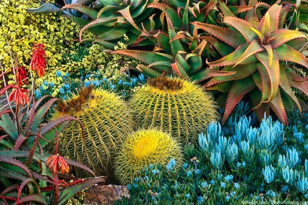 California drought tolerant succulent garden 871-16