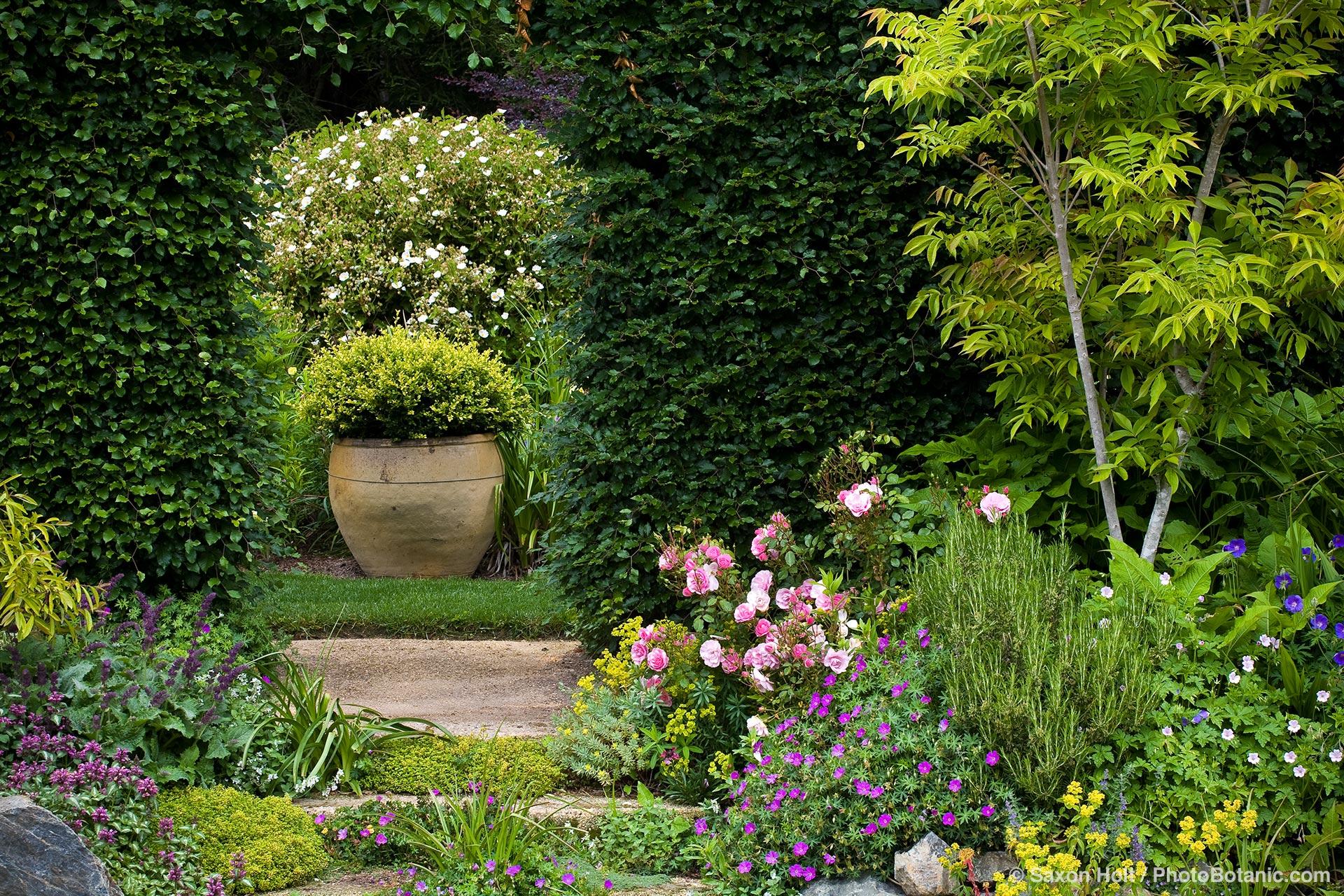 portal in hedge digging dog nursery