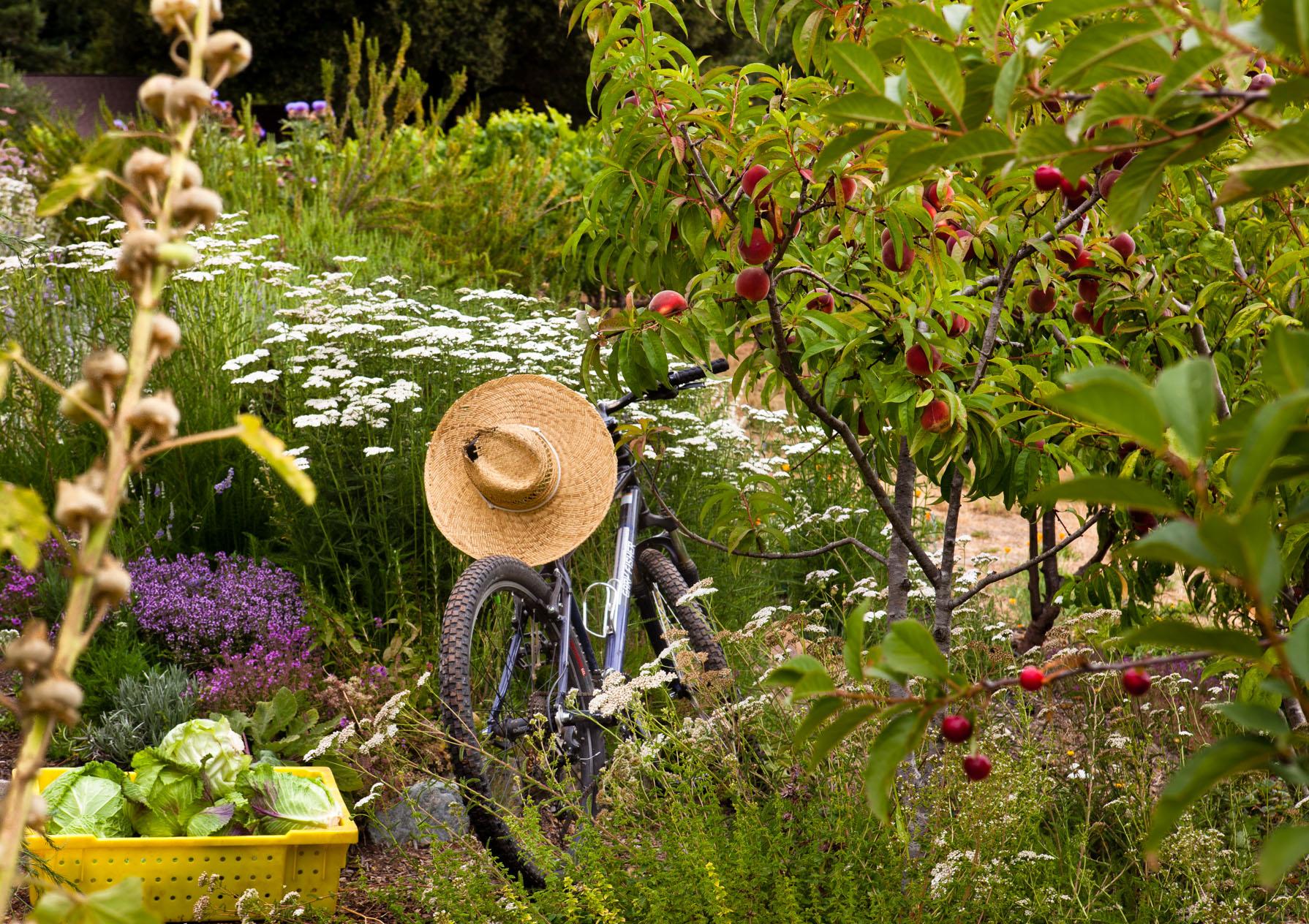 Gardener's bike in vegetable garden