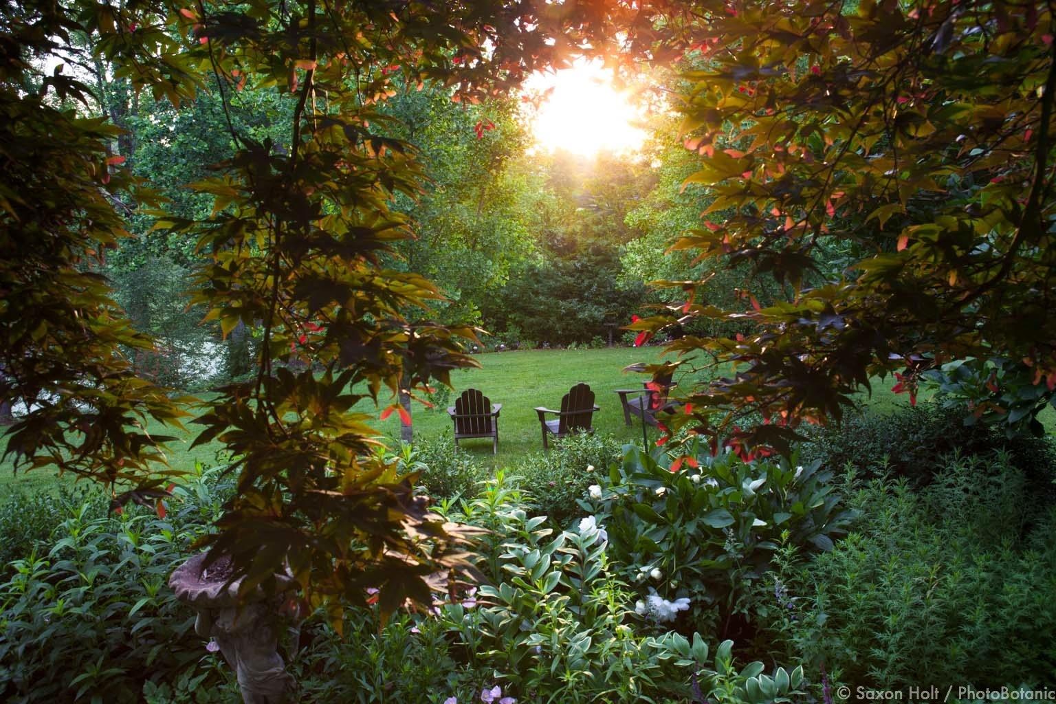 morning light in virginia garden