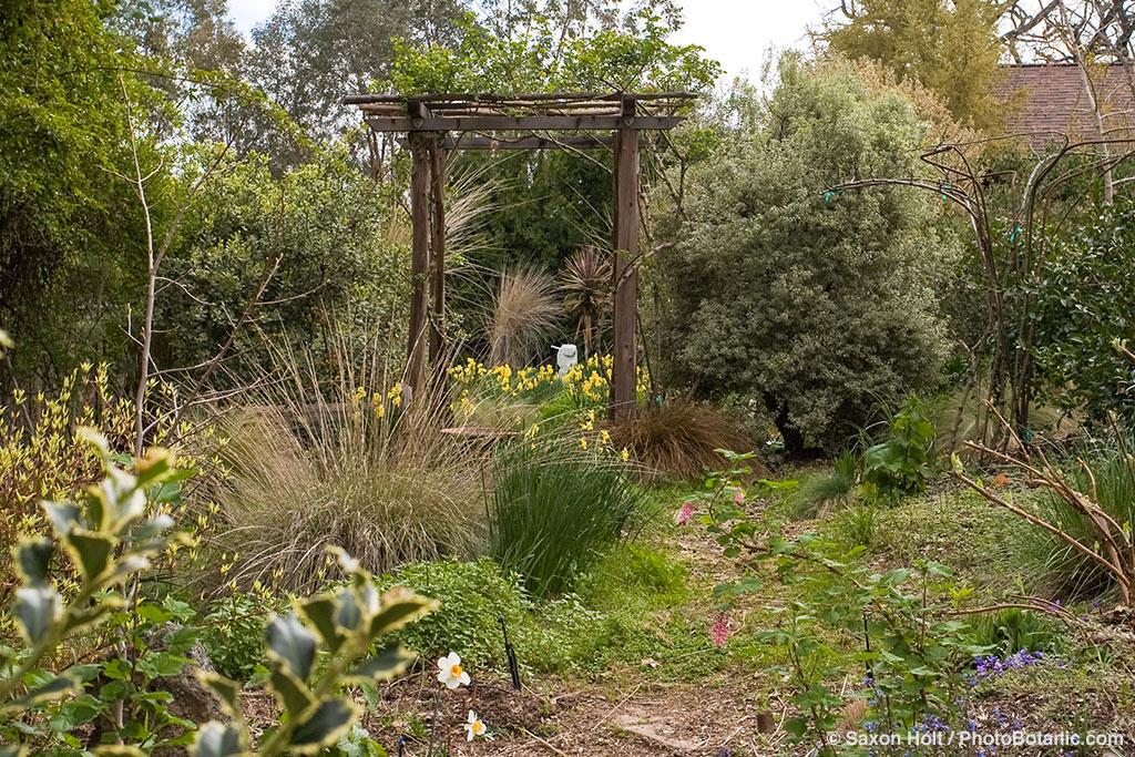 1903_1429cr rustic pergola in early spring garden