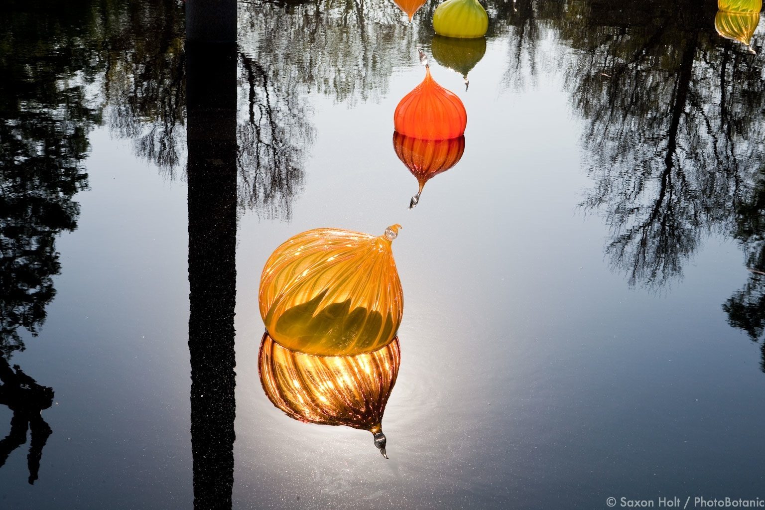 pond with glass missouri botanical garden