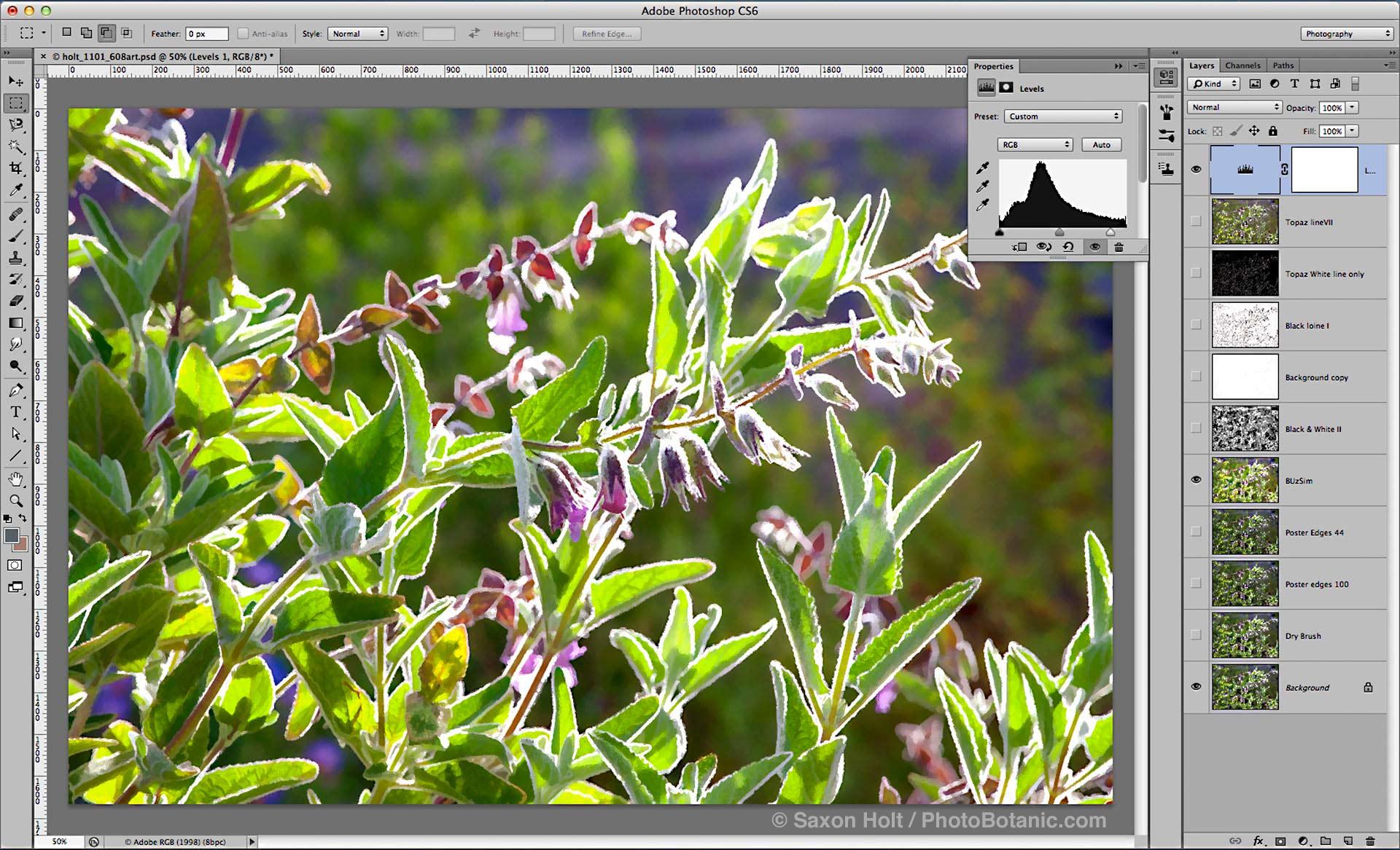 screenshot 1101_608art Lepichinia fragrans; photoshop filter options