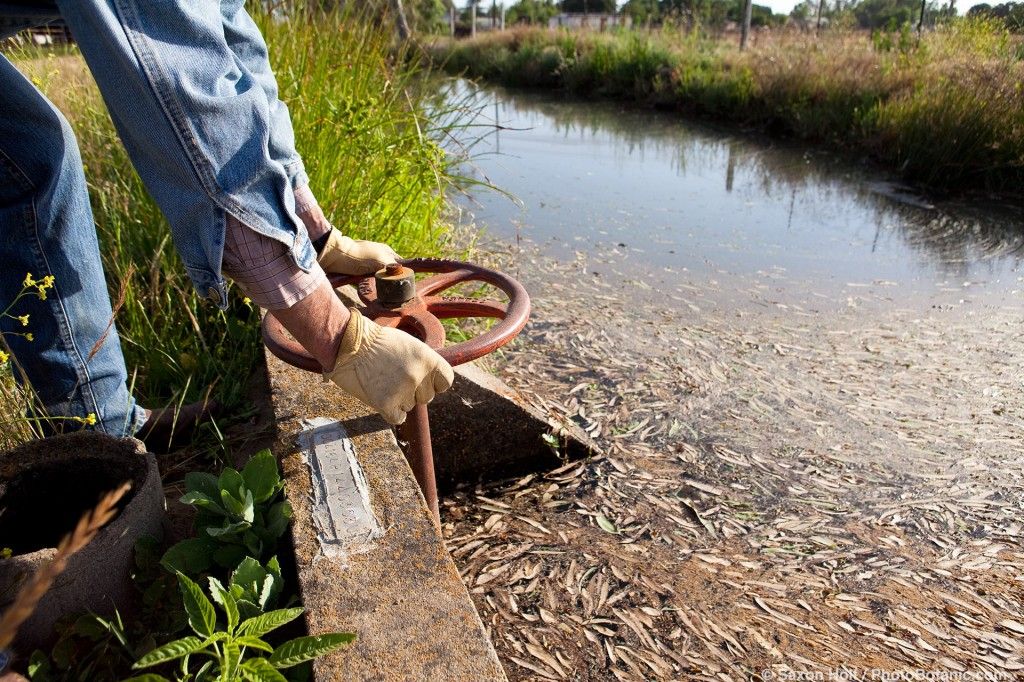 Rancher opening sluice gate from irrigation canal, Merced California