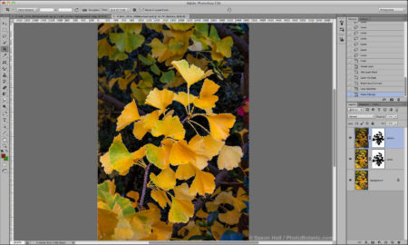Gingko-branch-Screenshot-FB.jpg