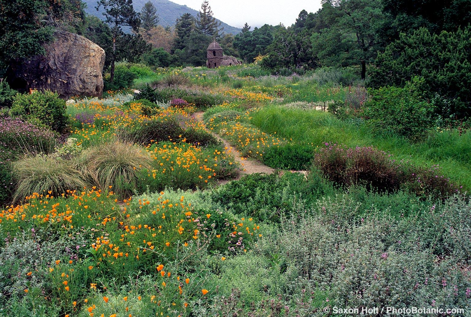 santa barbara botanic garden lorie f bartron