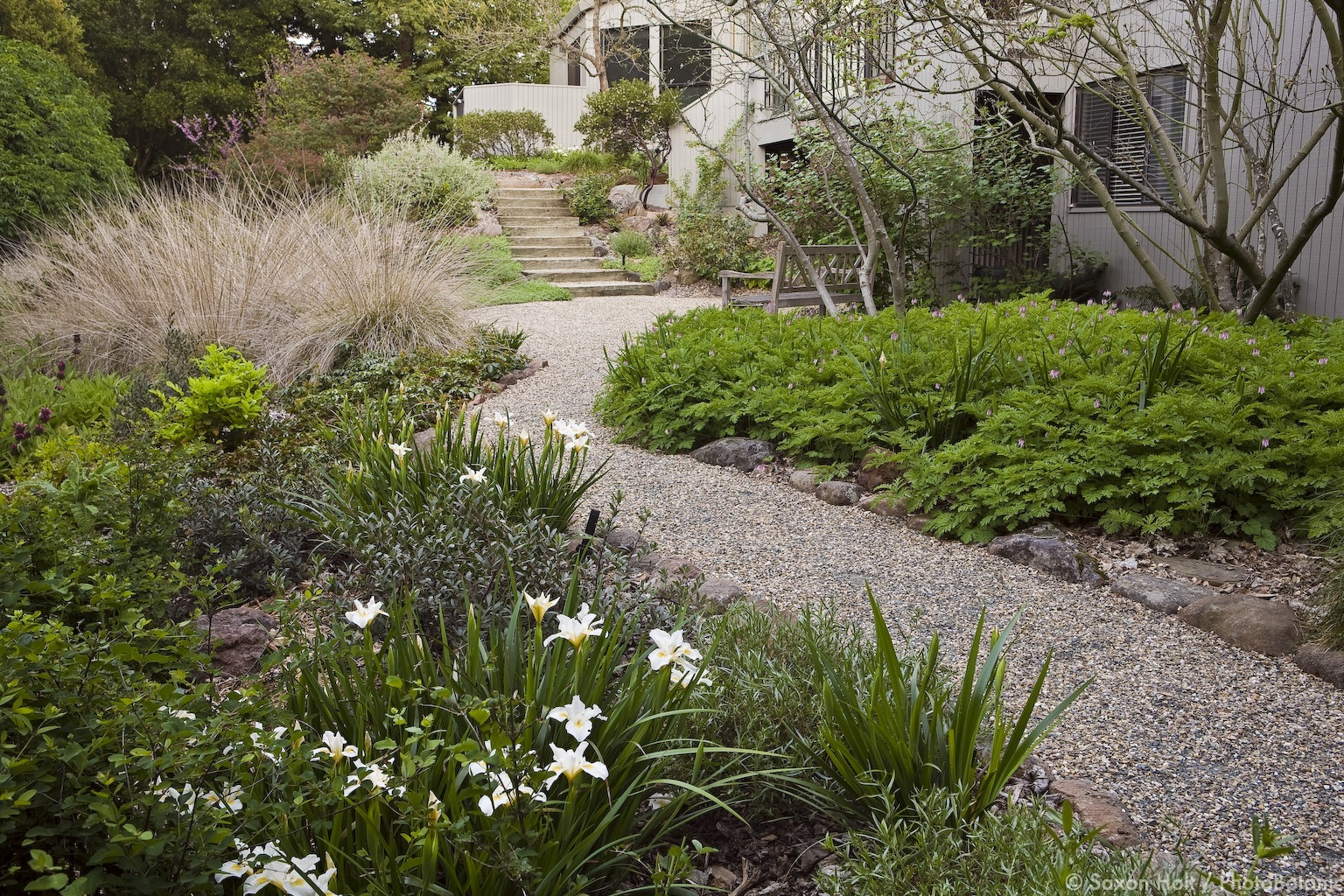 Native plant gardens can have design and structure