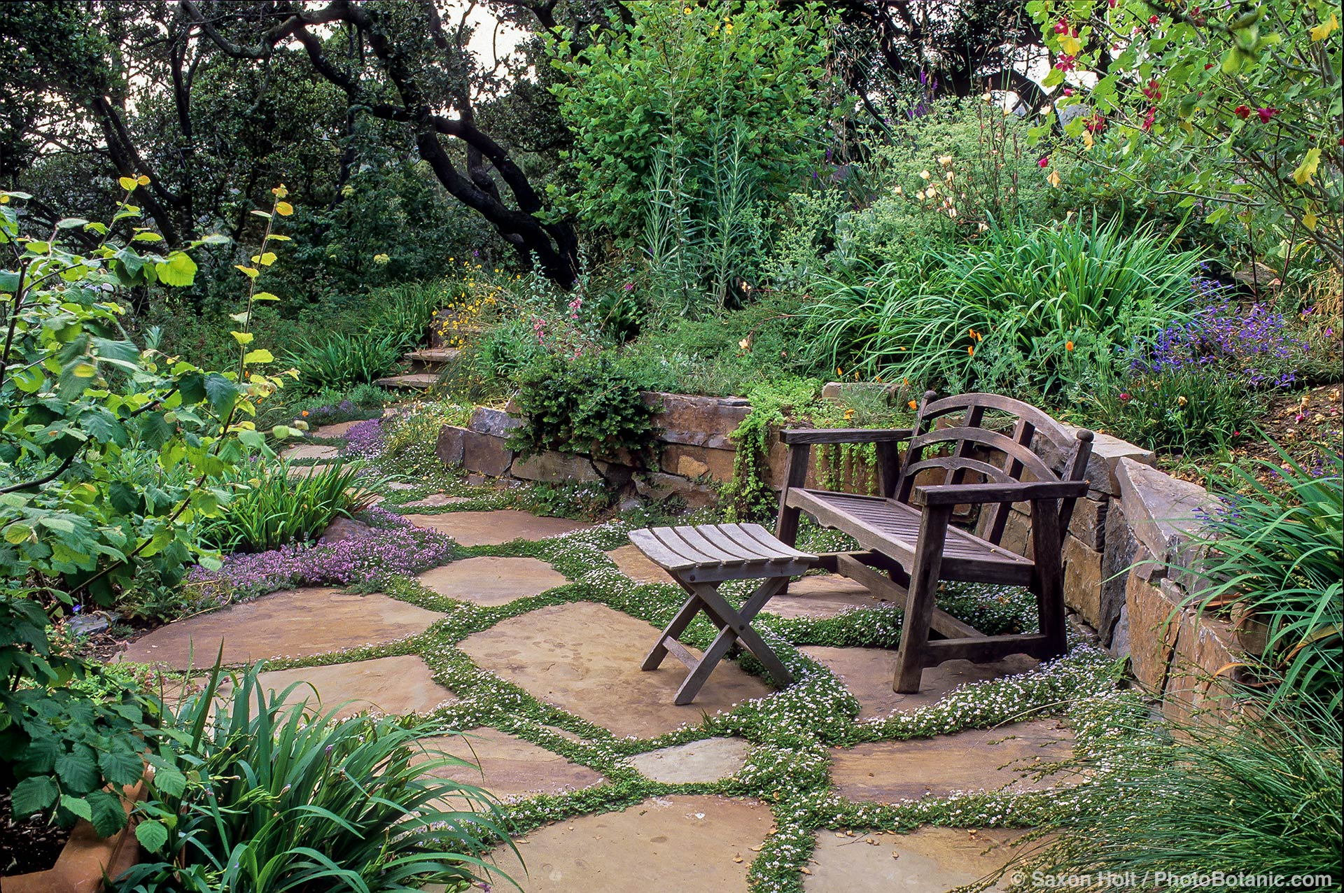 A patio with creeping thyme is surrounded by California native plants