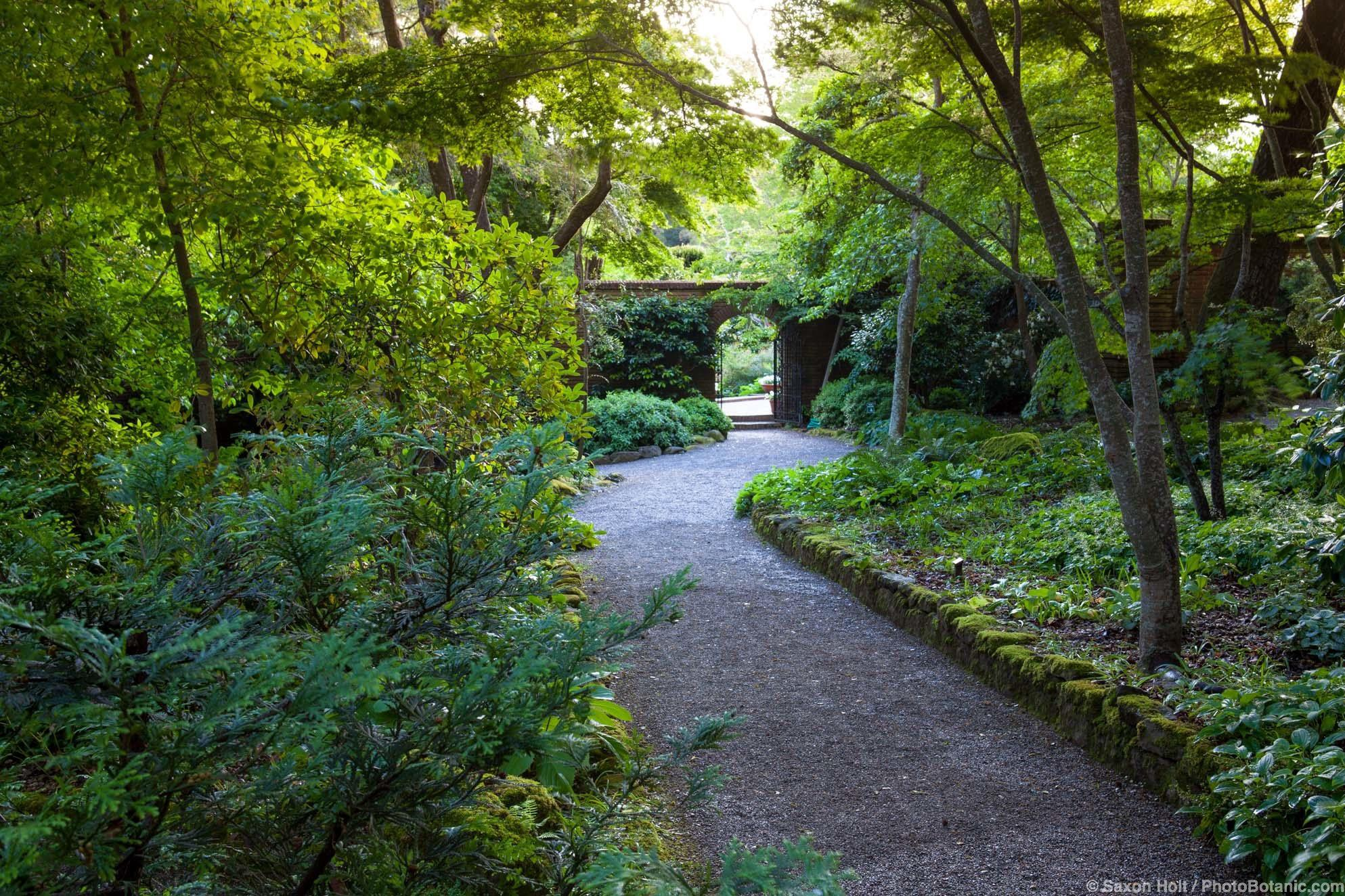 Gravel path in woodland garden to open door into walled garden in morning light at Filoli
