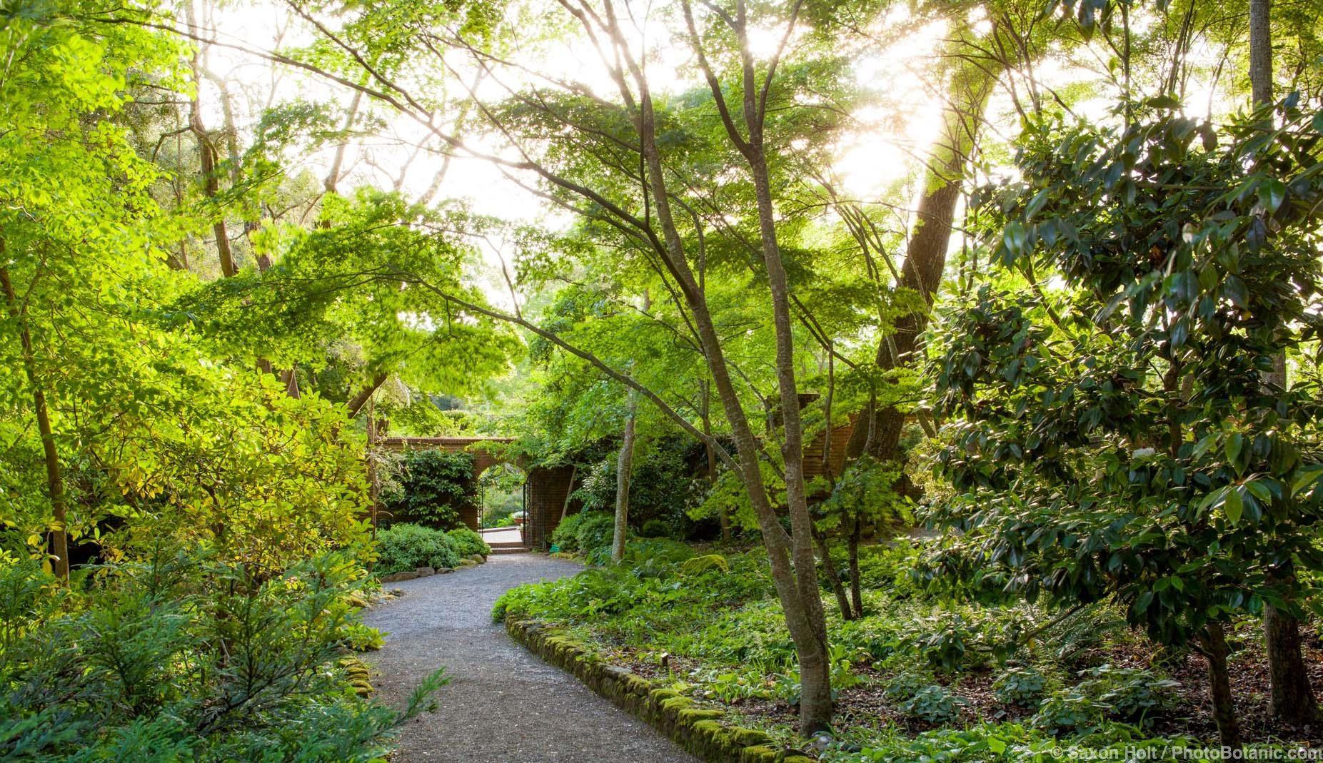 in woodland garden to open door into walled garden in morning light at Filoli