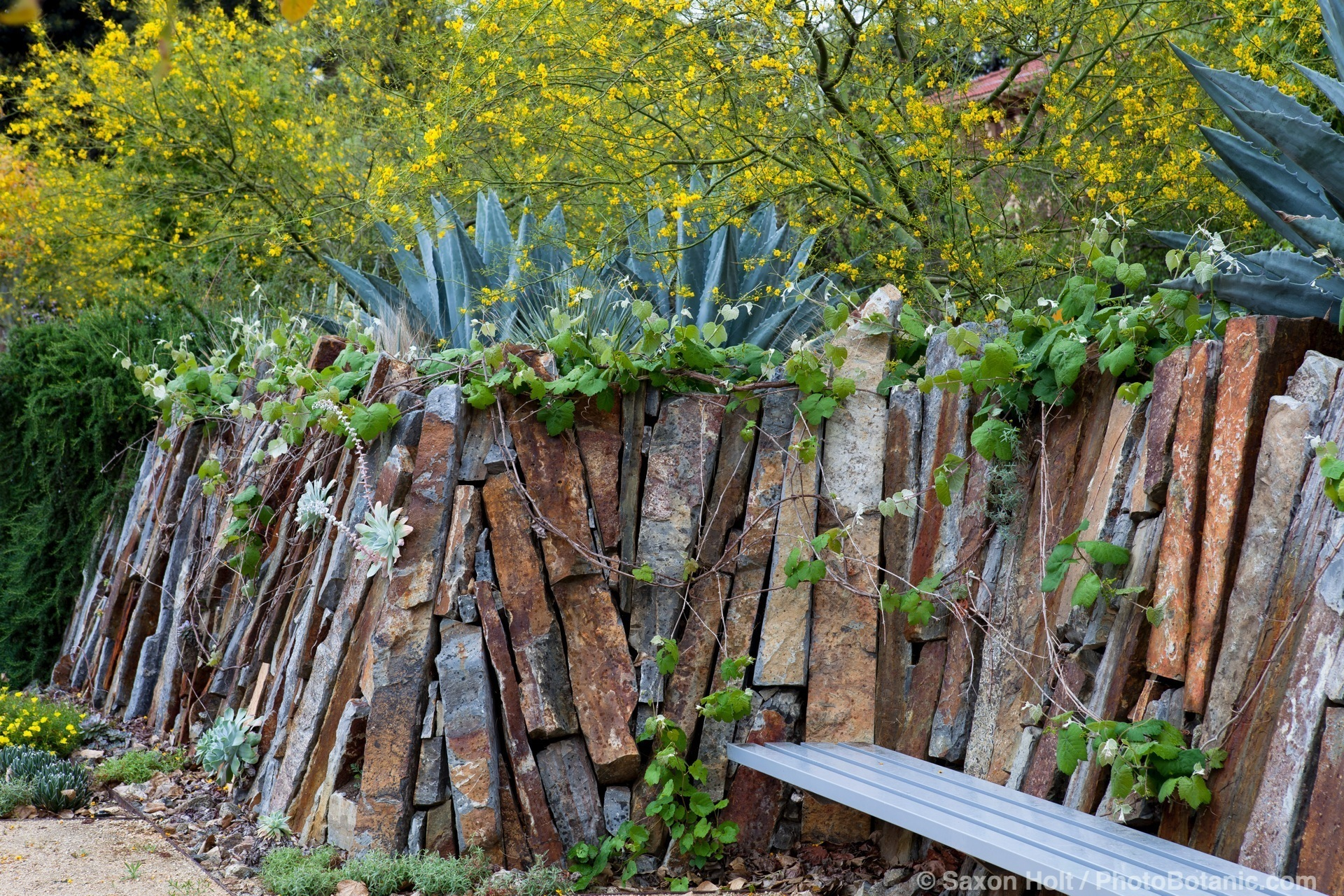 Dry stack stone wall in dry climate,drought tolerant garden at Los Angeles Natural History Museum