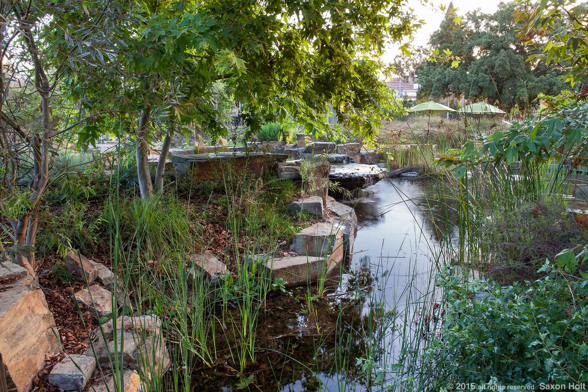 Pond, the Natural History Museum of Los Angeles, outdoor habitat garden