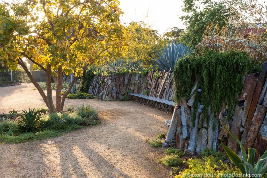 Morning light through trees over crushed rock paths and stone retaining wall, Living Wall, Los Angeles Natural History Museum