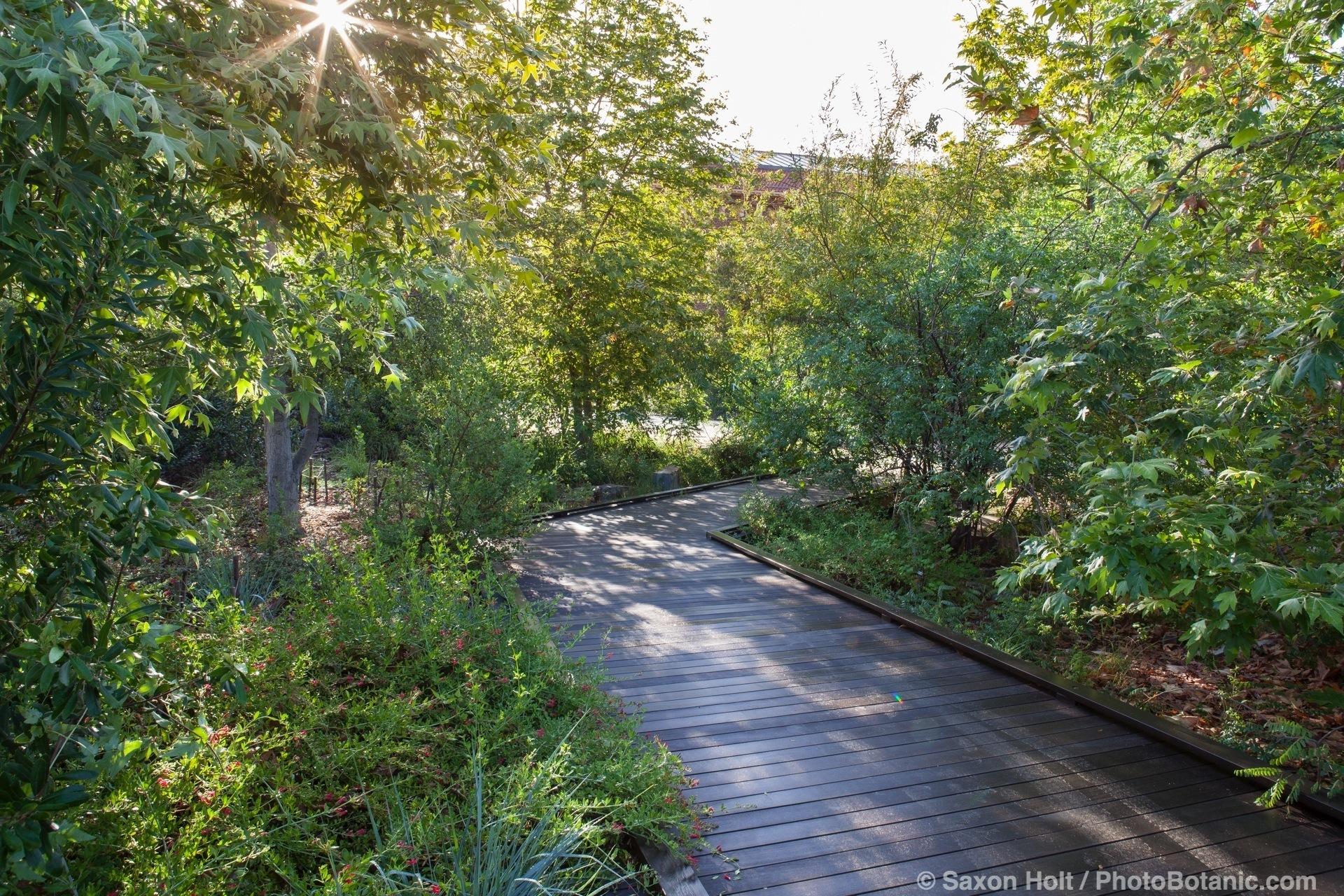 Boardwalk path through habitat garden, the Natural History Museum of Los Angeles.