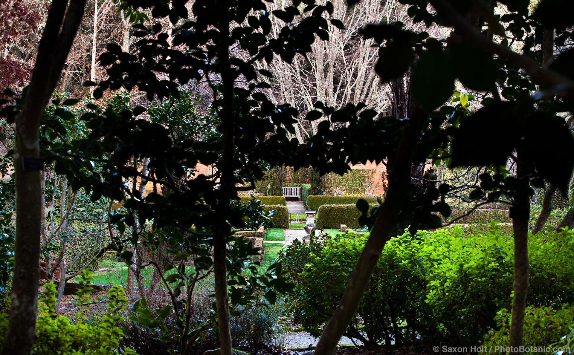 View of Filoli Wall Garden seen from shady Camellia shrub garden in winter