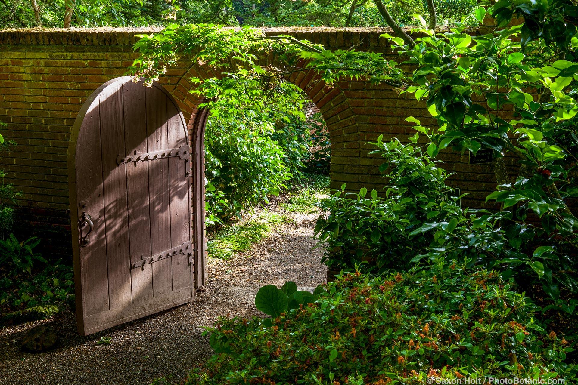 Wooden door in brick wall; open from woodland garden to garden beyond at Filoli