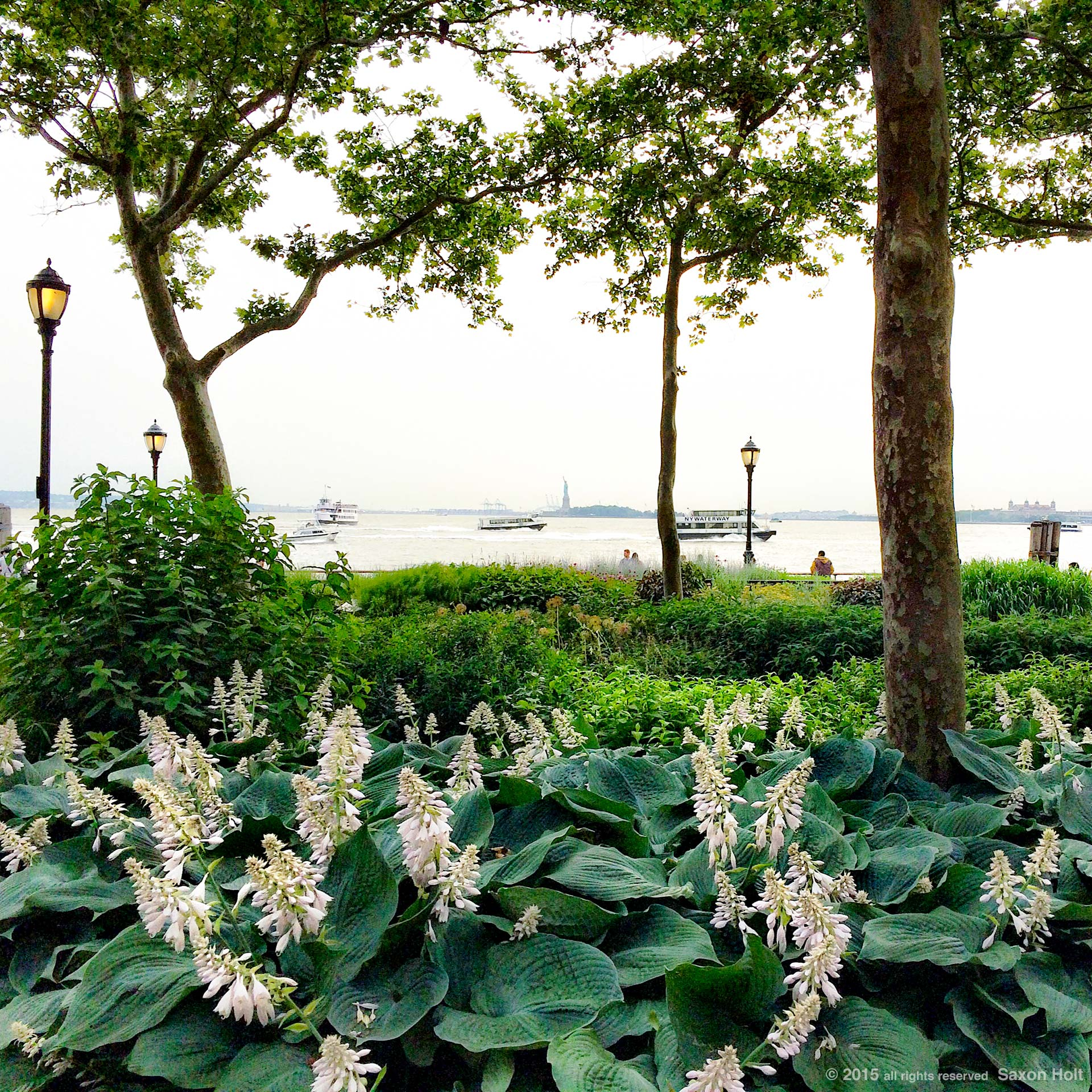 Battery Park, New York City; view of Statue of Liberty with Hosta