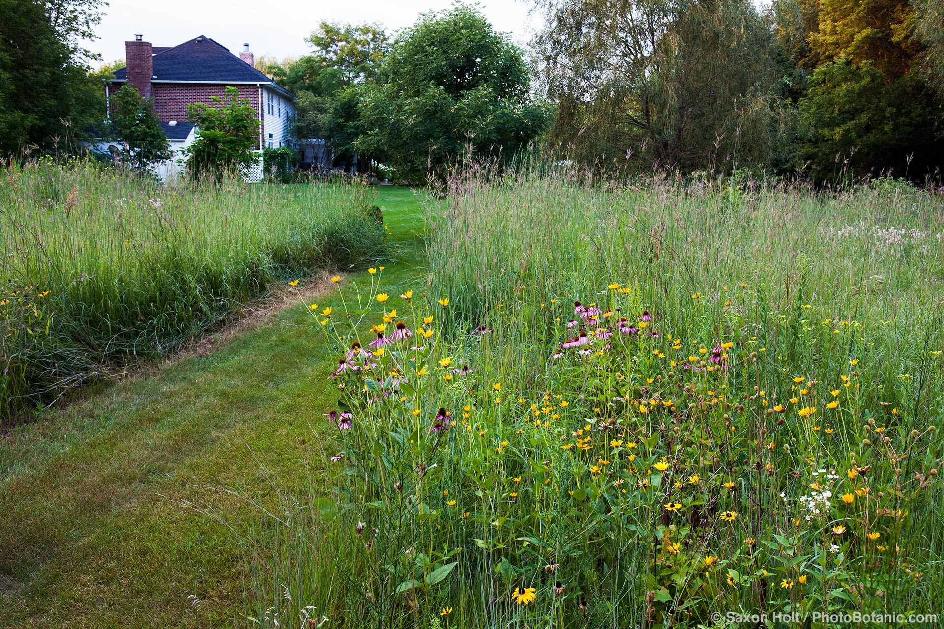 Wide mowed path through flowering meadow prairie garden, Willenberg garden