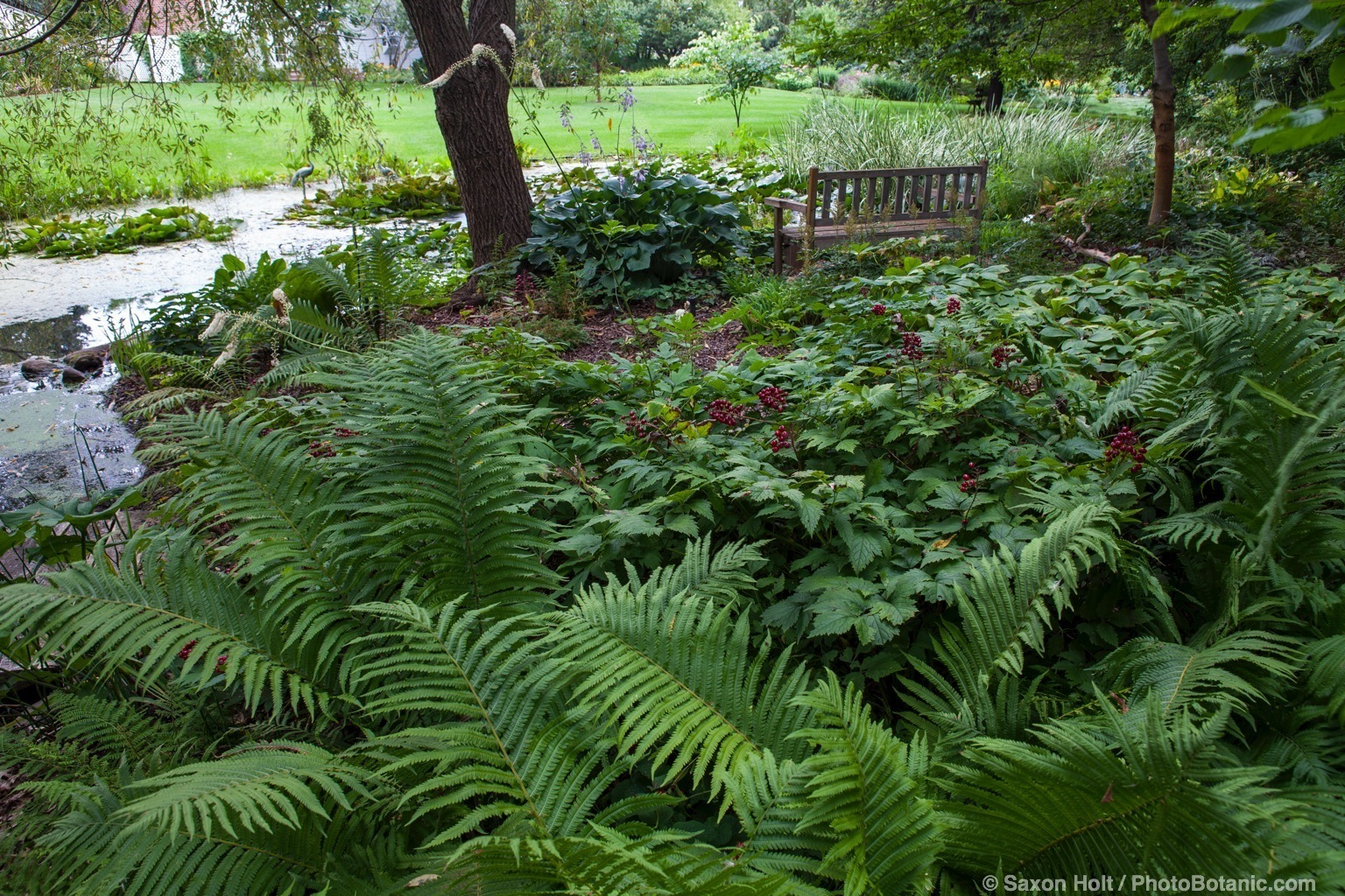 Shady groundcovers with ferns behind bench and stream in Minnesota garden