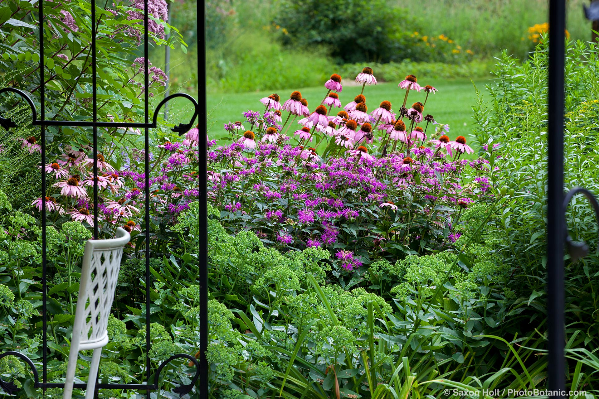 View of summer perennial border garden with Purple Cone Flower (Echinacea), Bee Balm (Monarda), and Sedum seen through iron gates,  Willenberg garden