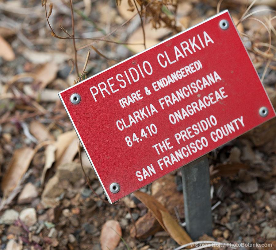 California native plant