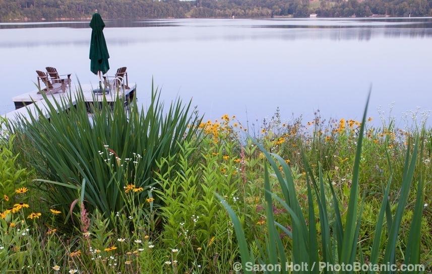 Connecticut meadow garden with native wildflowers; Larry Weiner Design