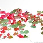 Roger's Red Grape vine lwaves autumn color