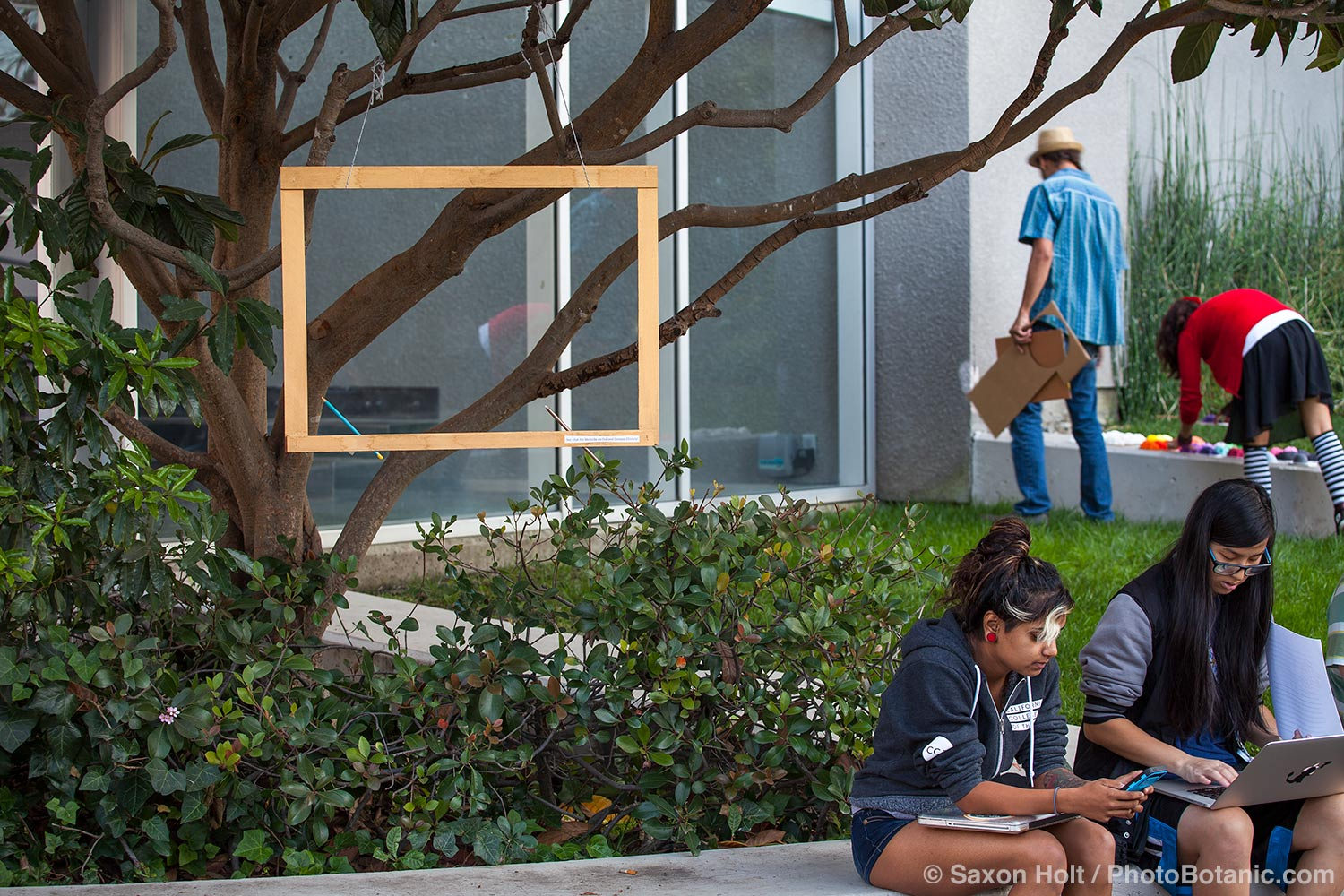 Empty frame hanging in tree at California College of Arts