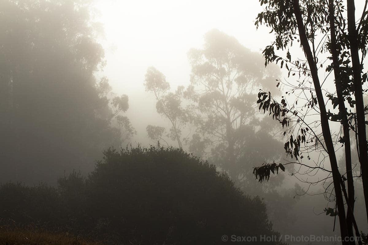 fog on Cherry Hill
