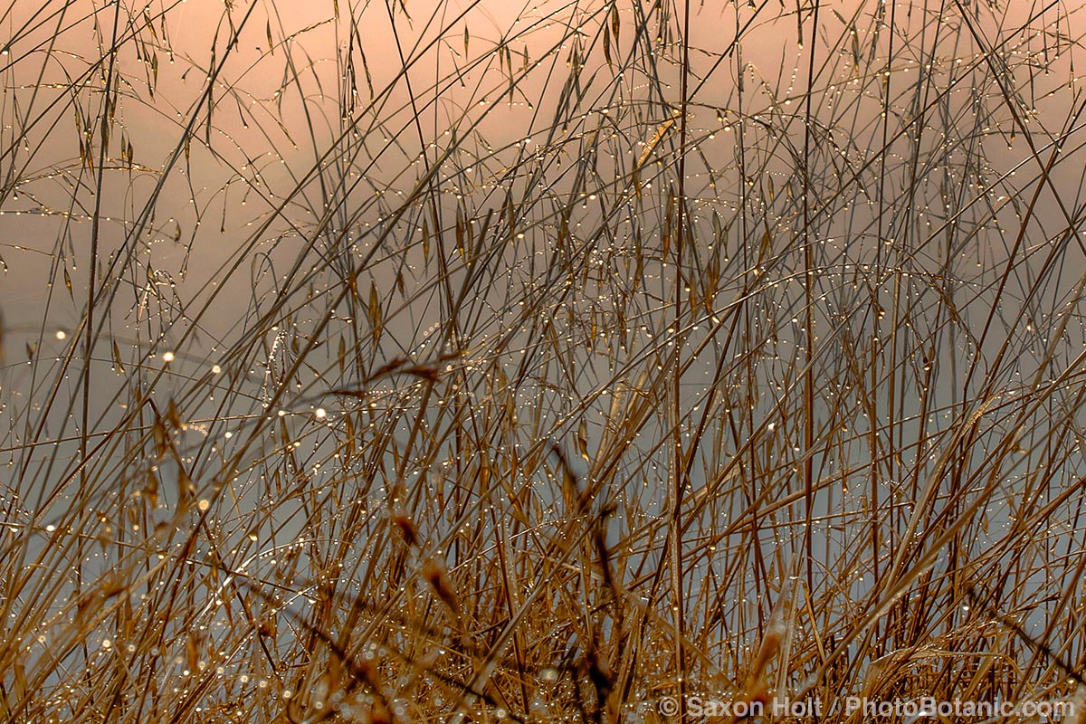 Brown autumn grass in fog on California hillside