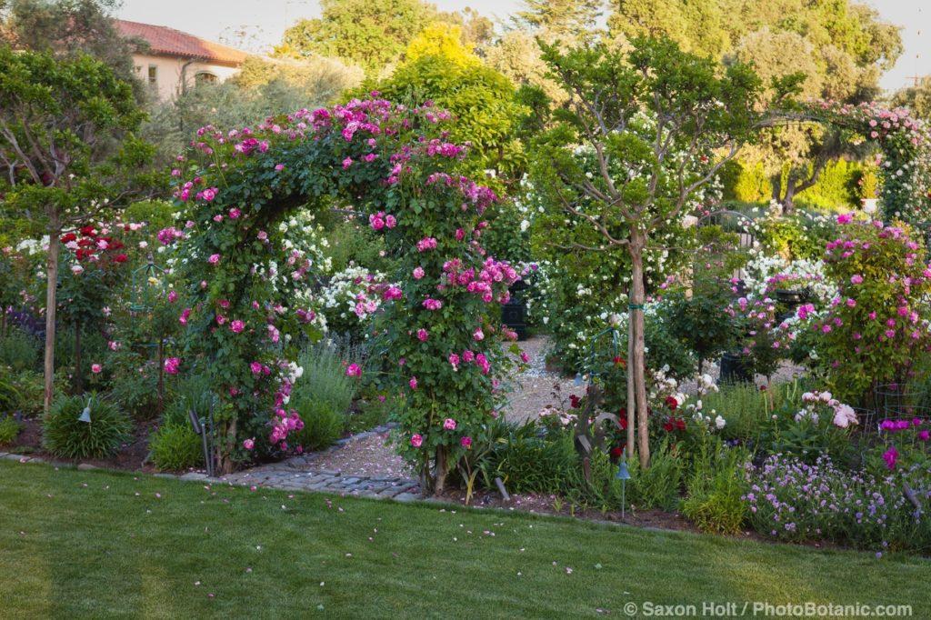 Magowan Garden