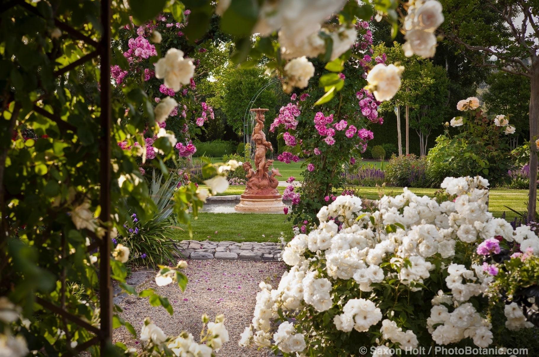 Terra cotta water fountain in lawn framed by rose garden.