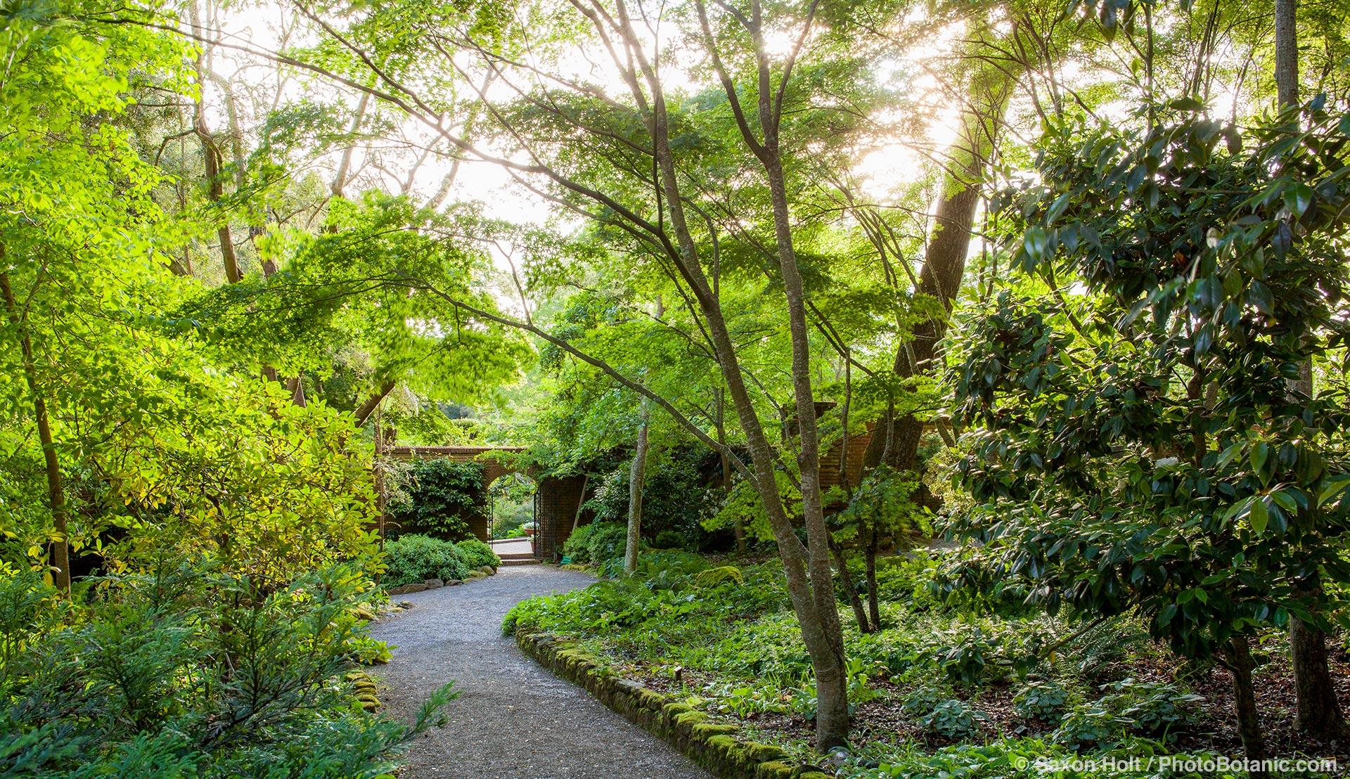 Gravel path in woodland garden to open door into walled garden in morning light at Filoli