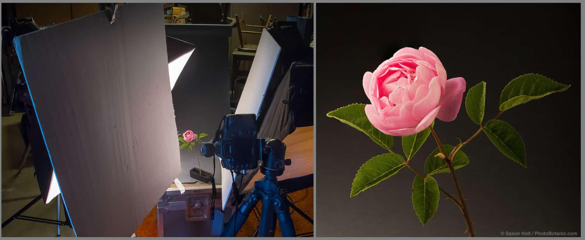 Saxon Holt's garage studio photographing old roses
