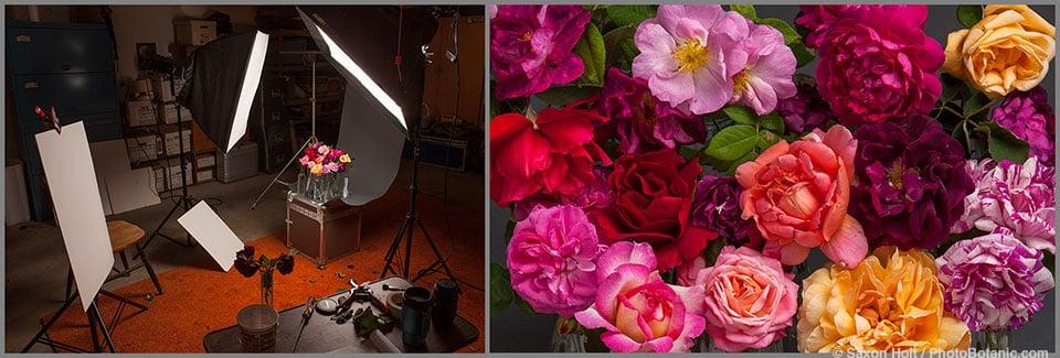 Vintage roses in my studio