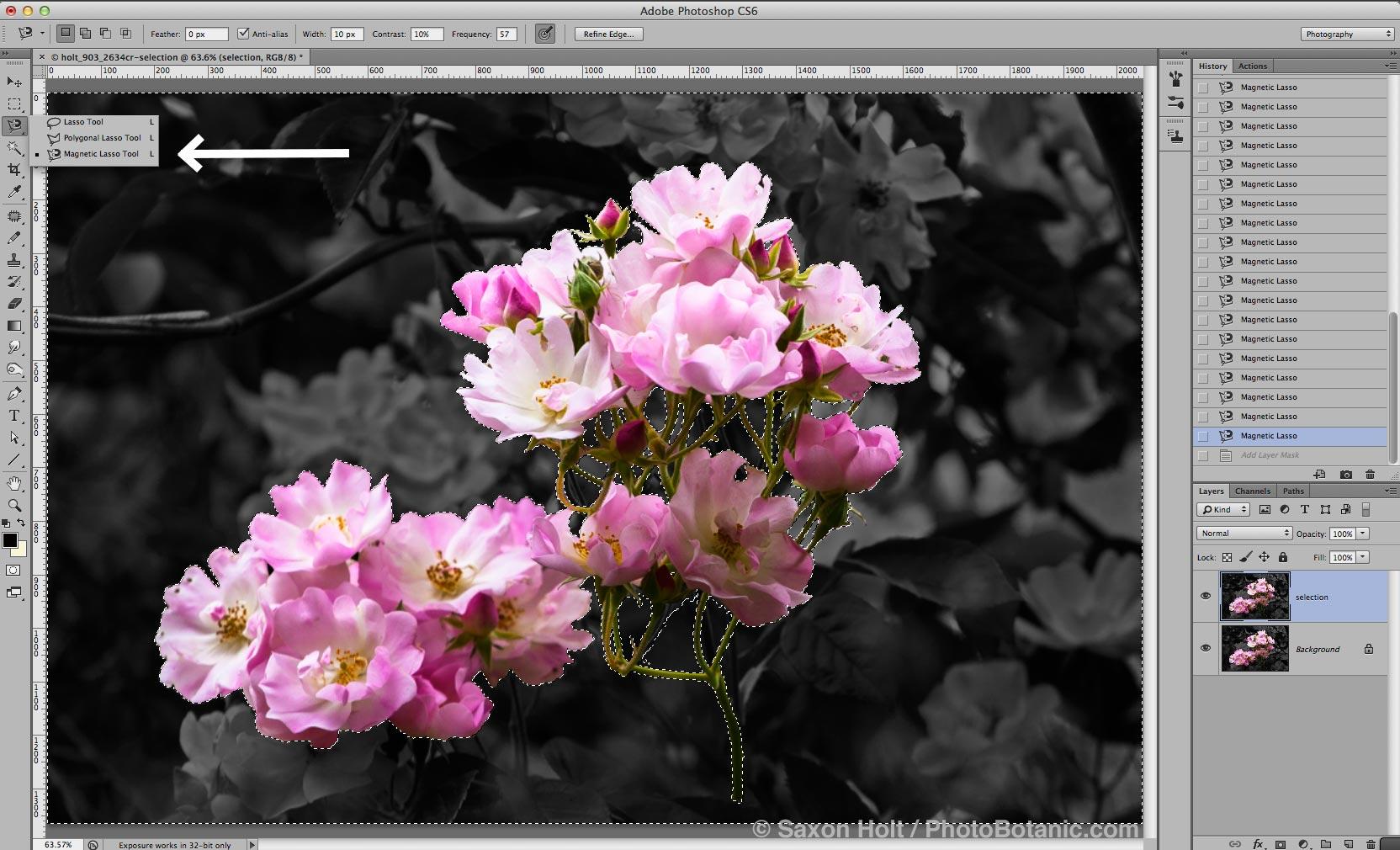 Screenshot -Extraction - Rosa 'Apple Blossom' , Rambler multiflora rose flowering in trees