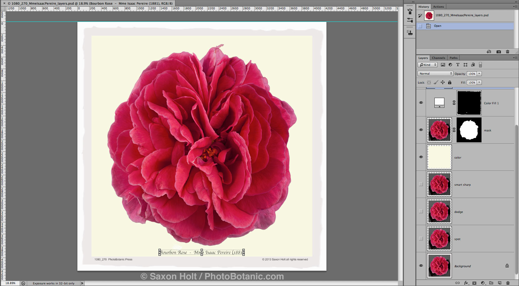 screenshot focus stack rose Mme Isaac Pereire in photoshop for silhouette vinatge rose file 1080