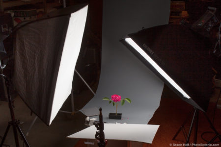 Studio set up for Rose flower silhouette using two strobe soft box lights and reflector
