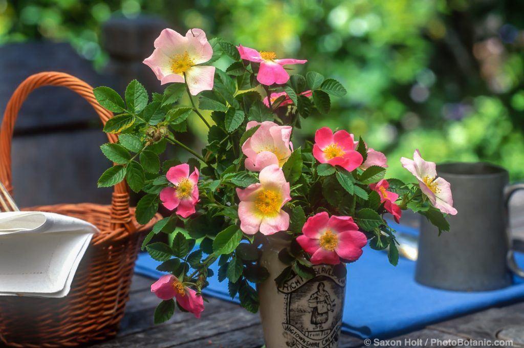 single species roses in simple bouquet on picnic table