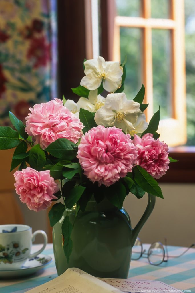 Bouquet of pink rose 'Jacques Cartier' on table by window