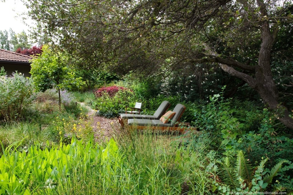 Lounge chairs under shady oak trees in back yard habitat California native plant garden with bog, Schino