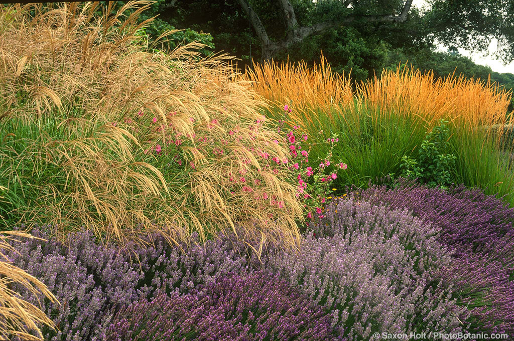 Photobotanic gardens in california photobotanic for Border grasses for landscaping