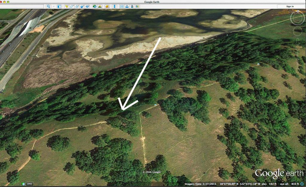 Oak trees on Pinheiro Ridge - Google Earth