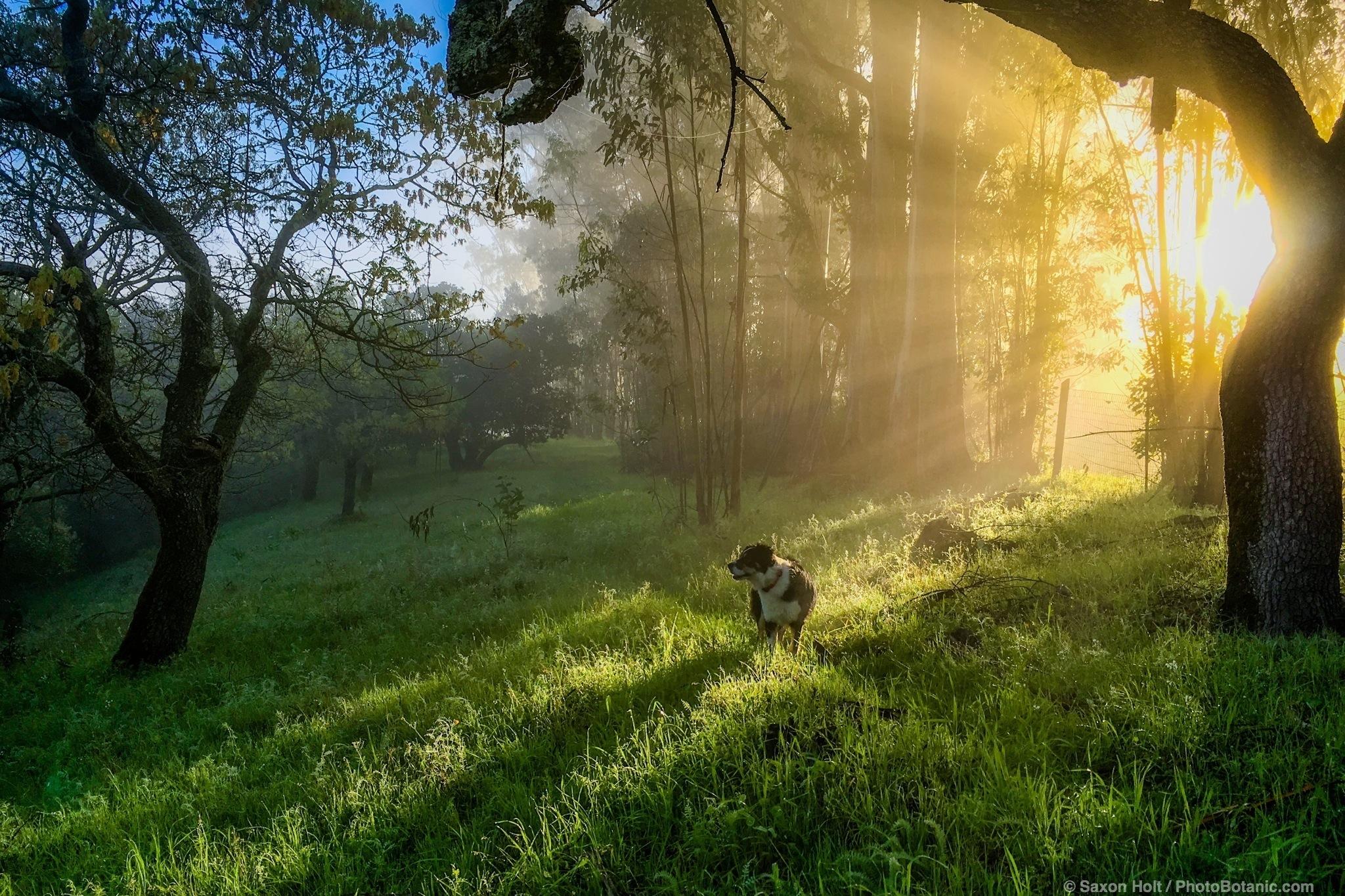 07:53:45 Lat. 38,6.8462N; Long. 122,33.582W 02/29/2016. Morning light - fog breaking in the winter green hills California. Cherry Hill.