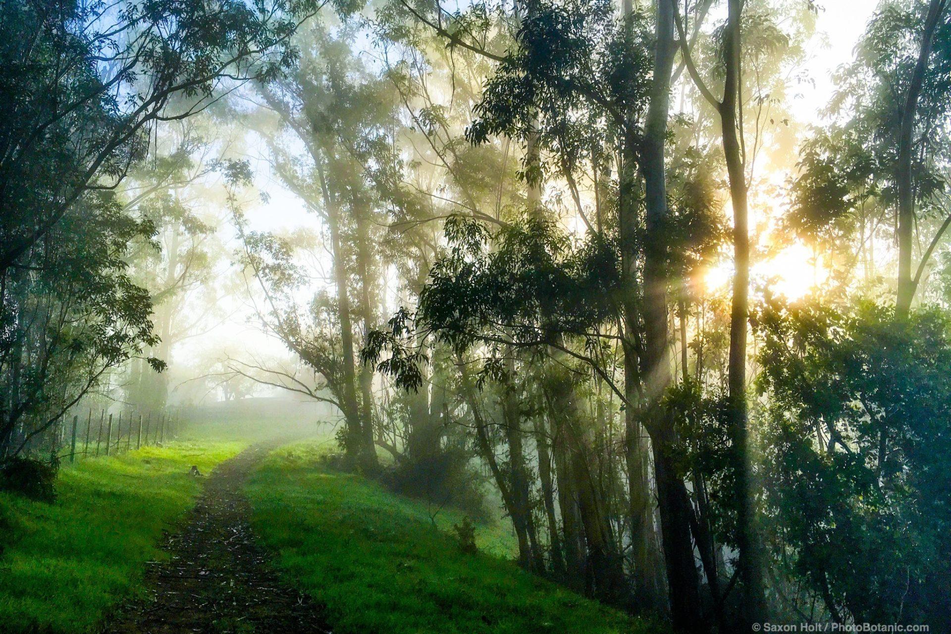 Morning light - fog breaking in the winter green hills California. Cherry Hill. 02/29/2016 07:58:28