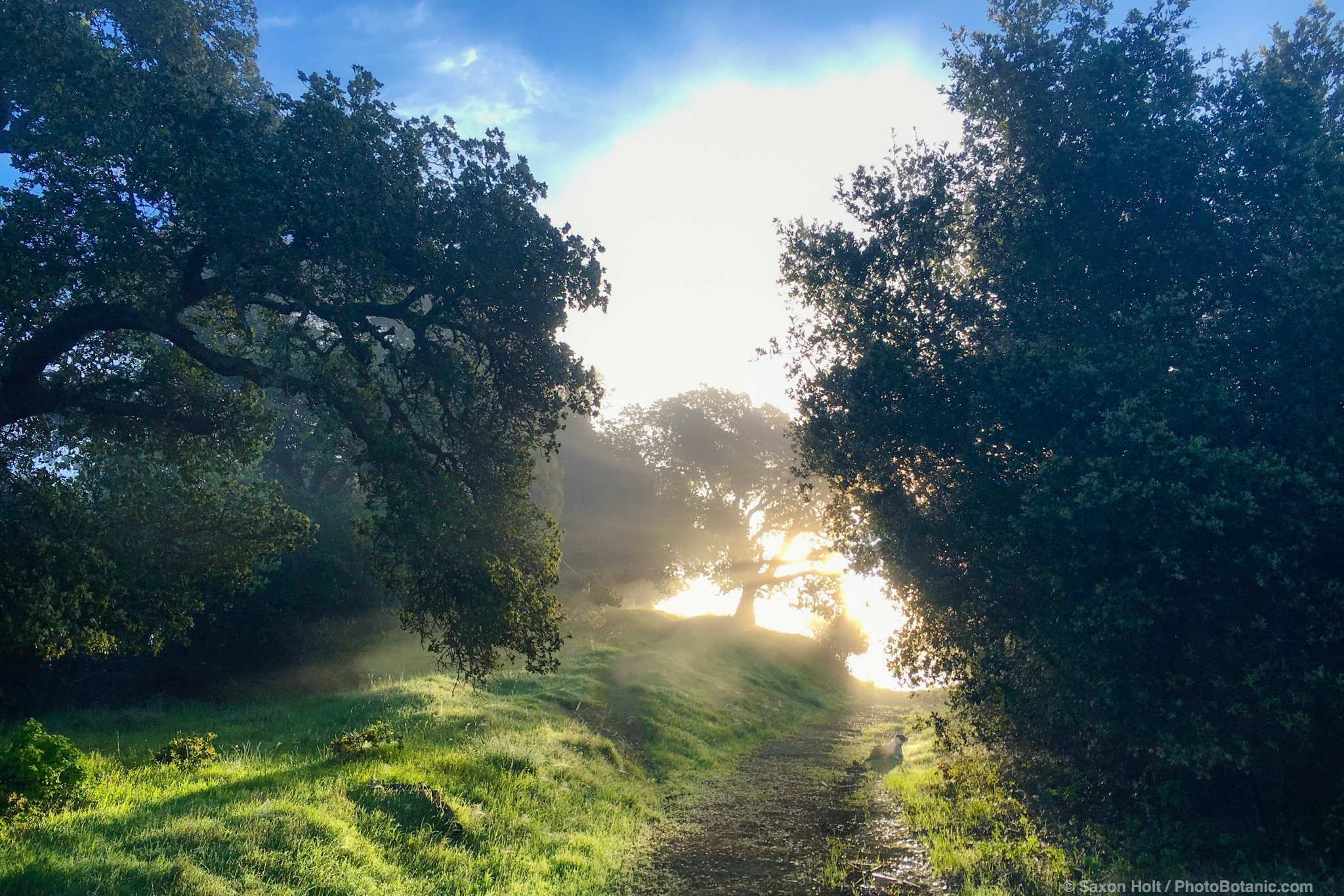 Morning light - fog breaking in the winter green hills California. Cherry Hill. 02/29/2016 08:02:58
